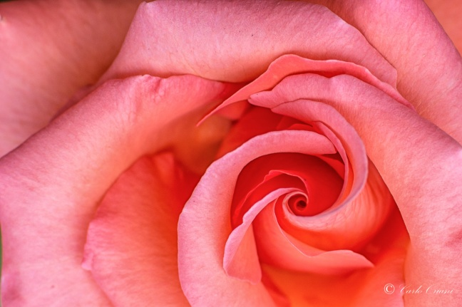 il vortice rosa