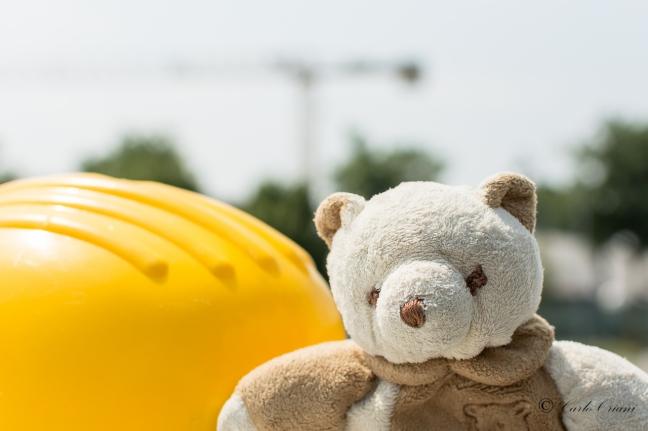 Teddy in cantiere.jpg